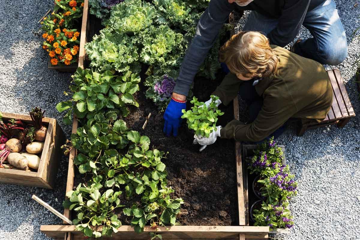 Fare l'orto con i bambini