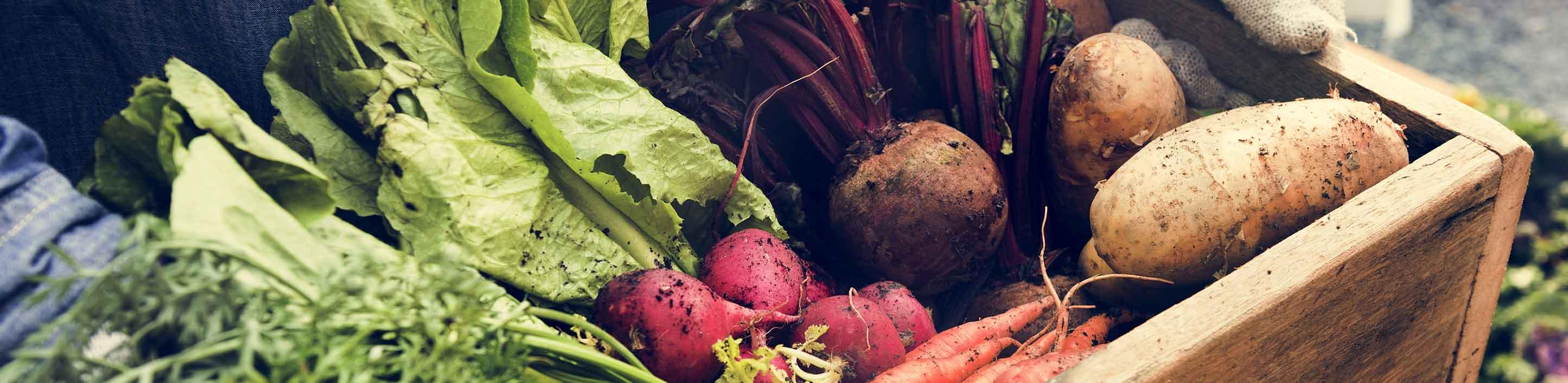 La filiera produttiva nell'agricoltura biologica