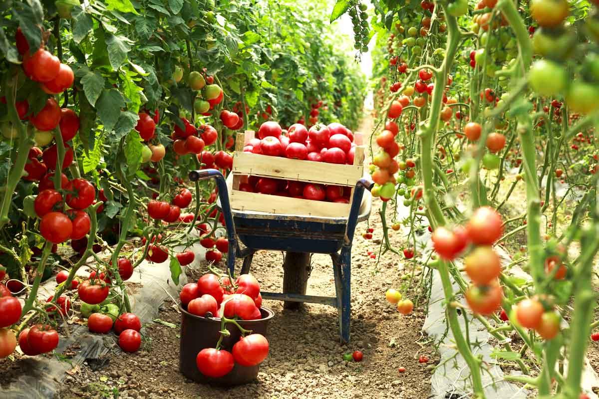 Agricoltura territoriale