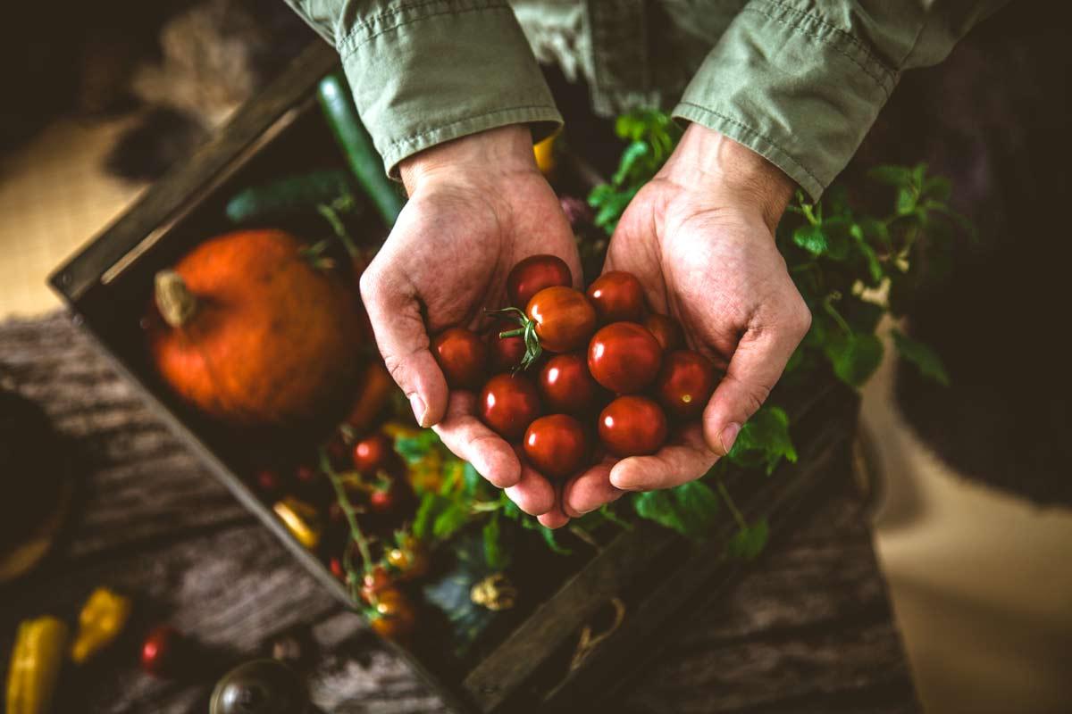 campagna coltivata biologicamente
