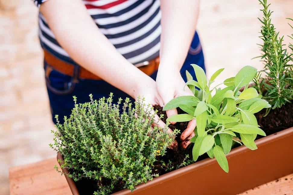 pesticidi naturali - vaso